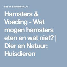 Hamsters & Voeding - Wat mogen hamsters eten en wat niet? | Dier en Natuur: Huisdieren