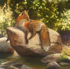 """His Favorite Spot"" a fine art edition by the award-winning wildlife artist Bonnie Marris"