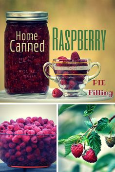 Canned Raspberry Pie Filling Preserve The Harvest Series; Home Canned Raspberry Pie Filling featured on Creative Spark Link Parties Home Canning Recipes, Canning Tips, Canning Soup, Jam Recipes, Fruit Recipes, Soup Recipes, Strudel, Growing Raspberries, Blackberries