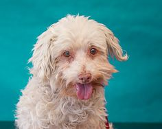 UPDATE:  Andre was adopted.  ANDRE located in Baldwin Park , CA, to be destroyed 11/20/2016