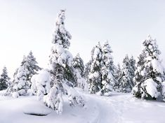 Trail running in Rovaniemi, Lapland, is even more awesome in winter. Lapland Finland, North Country, Different Seasons, Moomin, Trail Running, Awesome, Winter, Outdoor, Finland