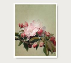Hey, I found this really awesome Etsy listing at https://www.etsy.com/listing/150220714/pink-flower-print-spring-blossom-photo
