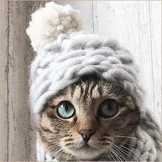 Lets Talk About Keeping Cats Safe During Winter Storms - CatTime - Keeping Your Cats Safe During Winter Storms, This cat is adorable, mine would never sit still long - Animals And Pets, Baby Animals, Funny Animals, Cute Animals, Funny Cats, Cute Kittens, Pretty Cats, Beautiful Cats, Crazy Cat Lady
