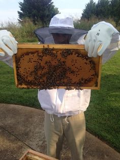 As some of you know, I've taken up natural beekeeping. So this is what that looks like...