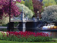boston public garden | Public Garden, Boston, Massachusetts | Gorgeous Gardens | Pinterest