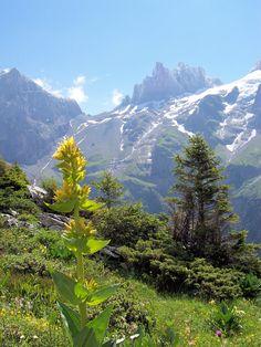 Engelberg - zwitserland la suisse/switzerland my heritage :) Austria, Places In Switzerland, Alpine Flowers, What A Wonderful World, Alps, Beautiful Landscapes, Wonders Of The World, Engelberg Switzerland, Places To See