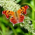 fanciful moment butterflies with flowers
