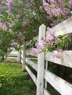 Country Spring ~ white fence and lilacs