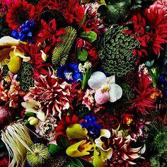 Flowers  #shiinokishunsuke #azumamakoto #makotoazuma #amkk #flowers #flowerart #東信 #東信花樹研究所