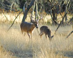 Deer Hunting in the Great State of Iowa  #iowa deer hunting  #deer hunting