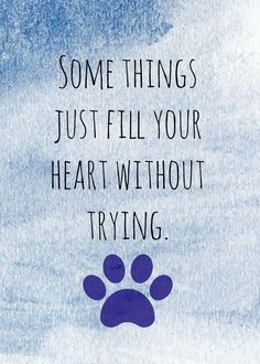 Fill your heart with love #petquotes #dogquotes http://www.nojigoji.com.au/