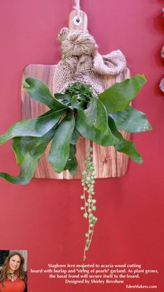 ACACIA-CUTTING-BOARD-AS-STAGHORN-FERN-PLAQUE-SHIRLEY-BOVSHOW