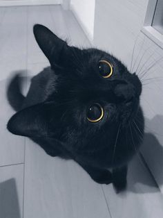 """Cute Black-cat """"KUKU"""", 24 february 2017 / grape Click on the link to check out great cat and kitten products at www.bowchickameowmeow.com"""