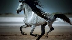 Amazing Galloping Horses 1080p HD