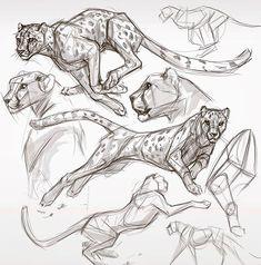 After dinner cheetah studies . Gesture Drawing, Cat Drawing, Drawing Sketches, Sketching, Cat Anatomy, Anatomy Drawing, Animal Anatomy, Big Cats Art, Cat Art