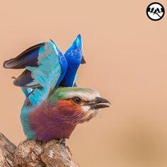 birdextremefeatures's photo on Instagram