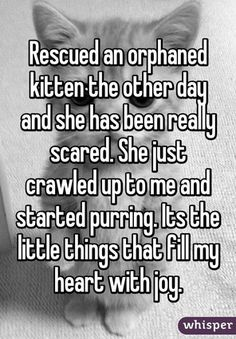 They Asked 18 Rescuers How Adoption Changed Their Lives. The Responses? I'm In Tears...