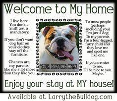 Funny but true Boxer Bulldog, Bulldog Pics, Bulldog Puppies, Funny Bulldog, Bulldog Quotes, Olde English Bulldogge, Funny Dogs, Cute Dogs, Funny Animals