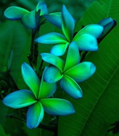 Blue green beauty