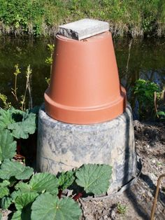 Rabarber - Diana's mooie moestuin Diana, Planter Pots
