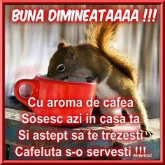 Morning Coffee, Good Morning, Sign, Google, Quotes, Cat Breeds, Buen Dia, Bonjour, Bom Dia