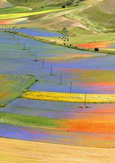 Blooming Castelluccio, Perugia Italy