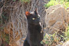 10 Weird-Ways Katzen wurden über verehrt durch die Geschichte - http://bestelisten.com/10-weird-ways-katzen-wurden-uber-verehrt-durch-die-geschichte/