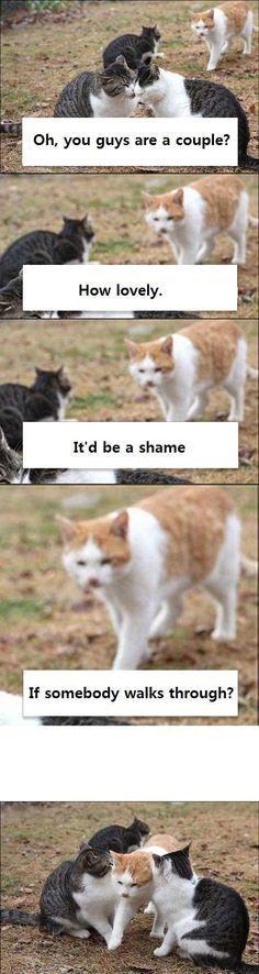 Animal Jokes, Funny Animal Memes, Funny Animal Pictures, Cute Funny Animals, Cat Memes, Funny Cute, Cute Cats, Hilarious, Animals And Pets