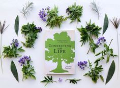 Book Review | Connecting With Life: Finding Nature in an Urban World by Martin Summer Eco Products, City Folk, Eco Beauty, Sustainable Gifts, Vegan Gifts, Summer Set, Green Gifts, Warrior Princess, Fashion Books