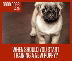 If you're getting a puppy and are already thinking about training, kudos! You've already got a great mindset to raising a good, obedient, loving dog. Next up, is to work on technique and setting goals.