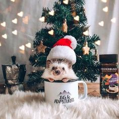 Dec 2019 - About little hedgehog and his life✨. See more ideas about Cute hedgehog, Hedgehog and Cute animals. Baby Animals Super Cute, Cute Little Animals, Cute Funny Animals, Cute Cats, Baby Animals Pictures, Cute Animal Pictures, Animals And Pets, Baby Hedgehog, Tier Fotos