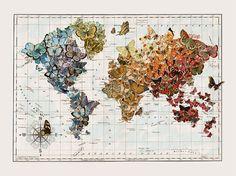 butterflies, vintage, wall map, art prints, office art, world maps, butterfli migrat, butterfli map, migrat map