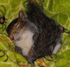 From Squirrels of Oshawa - sleeping baby!
