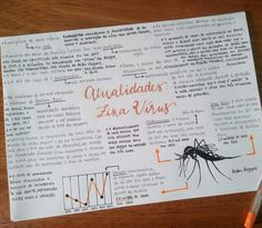 [ winter days - here, obv 9/? ] In my test, the ENEM, it's necessary to know the news of the moment. This summary is about Zika Virus.