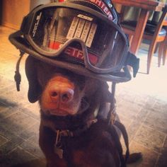 Fire Dog Style  | Shared by LION