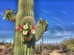 Saguaro National Park | Tucson | Arizona | Photo via IG @bella_nugent