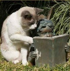 """For the love of God, turn the page. You are like the slowiest reader ever."" ¦ 12 Cats Who Are Serious About Reading ... These 12 images of cats and books are great! The one above is my favorite. :)"