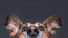 Table edge supervisor by Elke Vogelsang