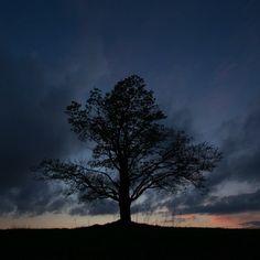 Treelapse #timelapse #sunset #sun #video #instavideo #nofilter #trentemoller #nature #landscape #explore #follow  #travel #natgeo #l4l #sky #skylovers #sunset_madness #sadness #tree #canon #beautiful #chasinglight #russia #hinking #pushkinru #natgeoru @lonely_tree_love