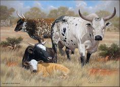Nguni cattle in oils Animal Paintings, Animal Drawings, Bull Painting, Chicken And Cow, Western Crafts, Cowboy Art, Wildlife Art, Cattle, Pet Birds
