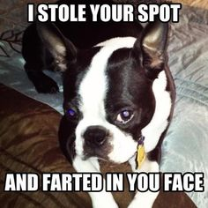 Ha! My dog totally does this. @Claire Dalgliesh (Fellow Fellow) Waggoner