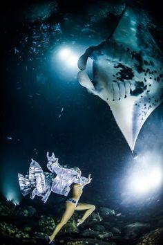 Hannah mermaid by Shawn Heinrichs with manta rays in Kona Hawaii for 'mantas last dance'
