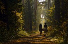 Rich men riding through the forest, beware. A band of outlaws may waylay you there. - Michelle D.