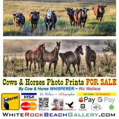 NOW ON SALE #cowART #hosrseART #crowart #seagullart Giving the GIFT of ART by ARTographer Ric Wallace will be a cherished item for years to come. Crow Art, Horse Photos, Prints For Sale, Horses, Rock, Gallery, Beach, Artist, Gift