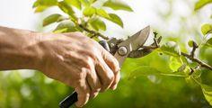 Landscape Plans, Landscape Design, Tree Felling, Plantar, Pruning Shears, Cool Plants, Backyard Landscaping, Garden Tools, The Good Place