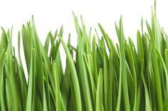 Dlaczego warto pić sok z trawy jęczmiennej?