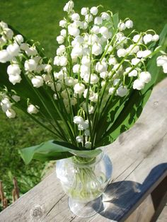 My favorite flower, lily of the valley! Just love it!