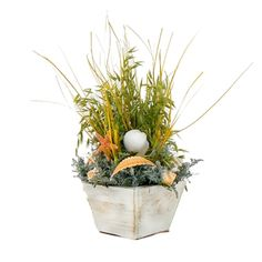 "Caspia Coastline 14"" Seashell & Dried Floral Table Top Arrangement"