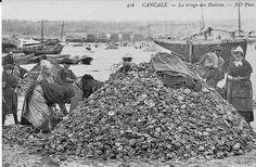 Le triage des huîtres fait par les femmes à Cancale