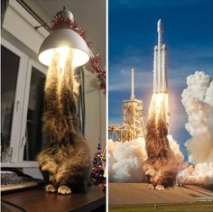 What an amazing cat